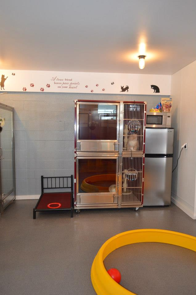 Double Stack Dog Kennel Designs For Max Efficiency In