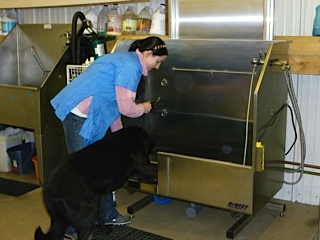 Hydraulic Dog Grooming Tubs Top Professional Pet Grooming