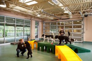 The Value of Pet Playroom Structures