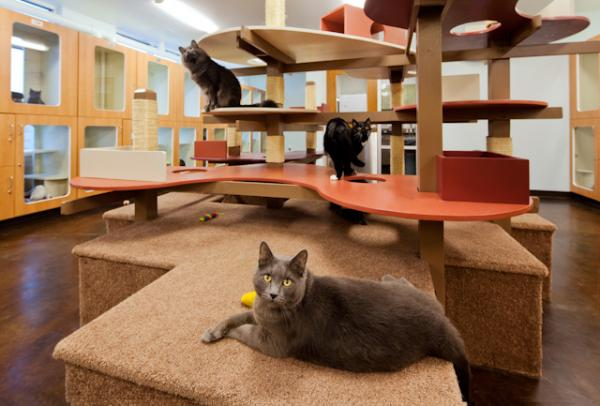 Cats Enjoy New Playroom Equipment At The Cleveland APL « Q104 ...