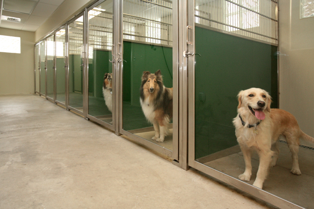 Top Trends In Dog Kennel Designs For 2014