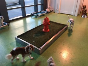 Pet Relief Station