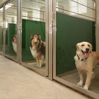 Dog Kennel Glass Door Direct Animal